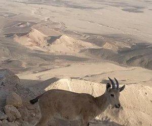Desert Peace Mitzpe Ramon Israel