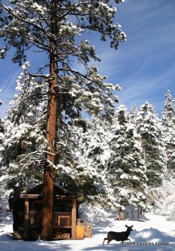Photo of Corkins Lodge