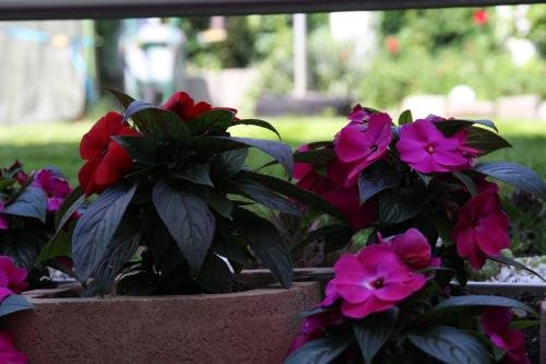 AJO Terrace - фото 4