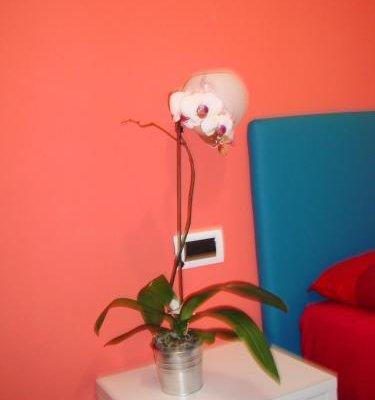 Bovio Modern Suite - фото 7