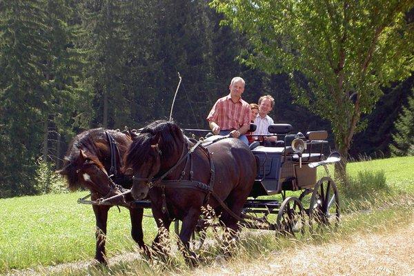 Bauernhof Verwohnbauernhof im Muhlviertel - фото 13