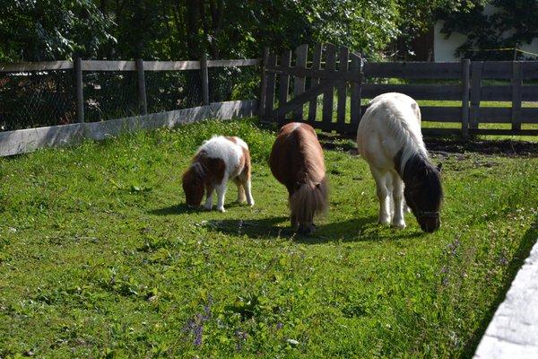 Bauernhof Pferdehof Liedlhof - фото 12
