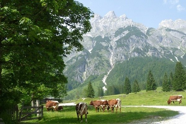 Bauernhof Vorderfromm - фото 2