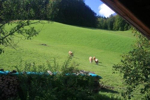 Alpenhotel Beslhof - фото 17