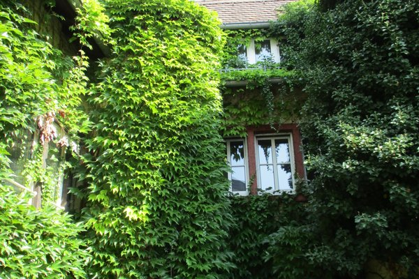 Hotel Burg-Stuben - фото 16