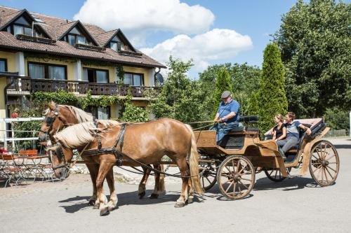 Hotel Reiterhof-Altmuhlsee - фото 18