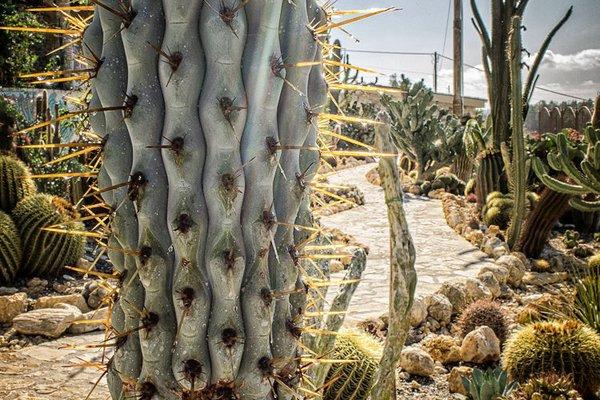 Relais Garden Cactus B&B - фото 17