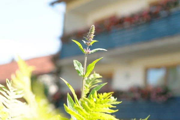 Hotel Schwarzes Ross - фото 12