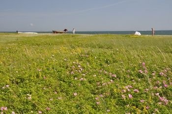 Ajstrup Beach Camping & Cottages - фото 18