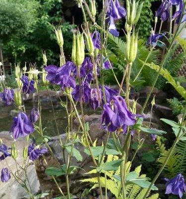 Tamar Guest House - фото 12