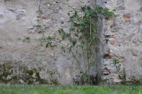 Convento Tarifa - фото 22