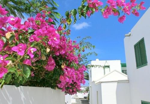 Villas Puerto Rubicon - фото 17