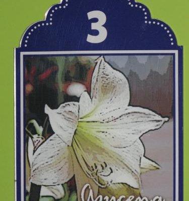 La Flor De Al-Andalus - фото 19