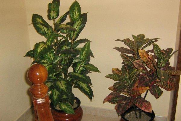 Apartamentos La Lula - фото 1