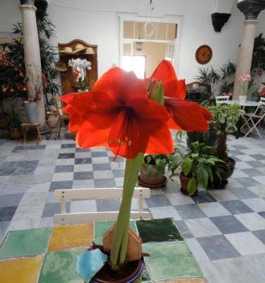 La Casa Grande - фото 16