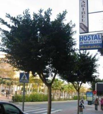 Hostal Maribel - фото 22