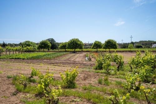 Apartamentos Marcelino - Formentera Break - фото 13