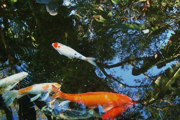 Central Sauna & Loft Apartments - фото 1