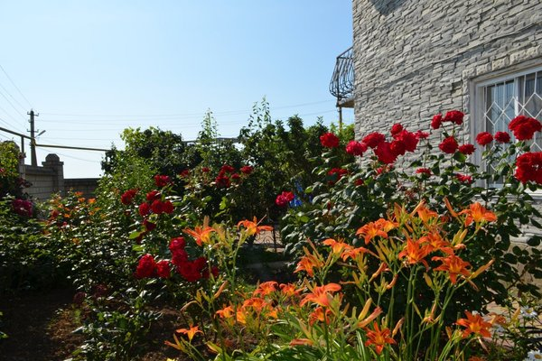 Selina Guest House - фото 14