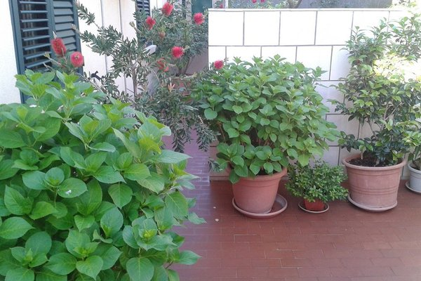 Guesthouse Anna - фото 17