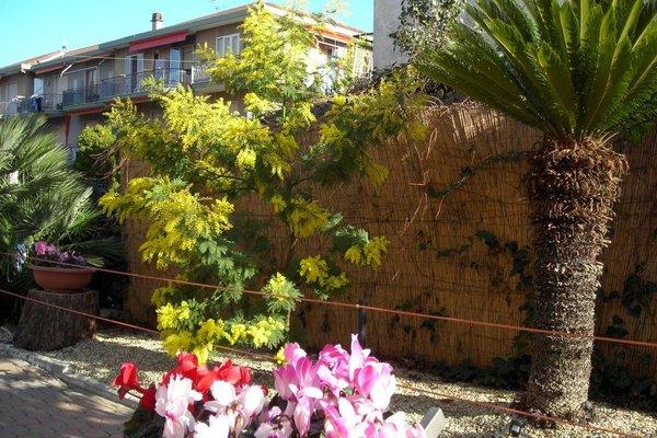 Hotel Delle Mimose - фото 18