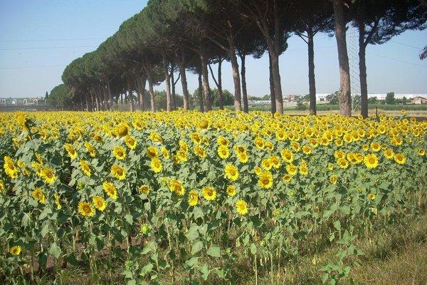 Agriturismo Pantano Borghese - фото 18