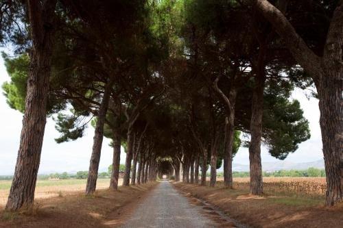 Agriturismo Pantano Borghese - фото 21