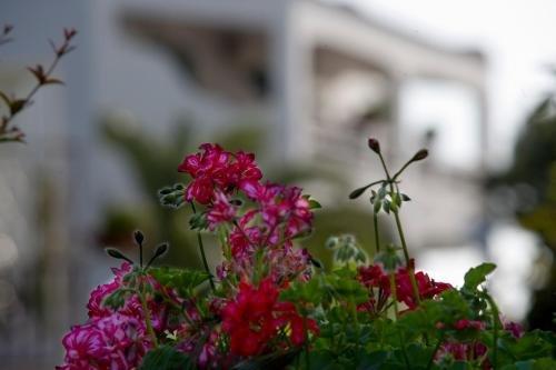 Hotel Parco Maria Terme - фото 16