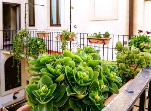 Hotel Casa Mia - фото 18