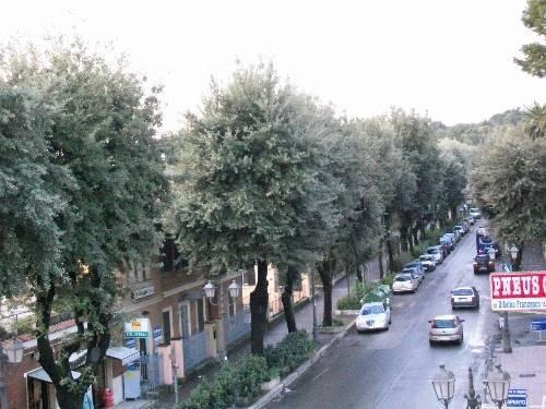 Roma - фото 14