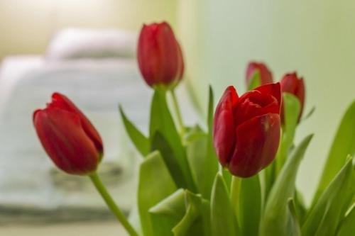 Hostel Flower - фото 20