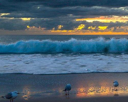 Surfers Horizons - фото 19