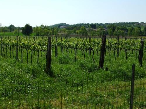Agriturismo Nuvolino - фото 20