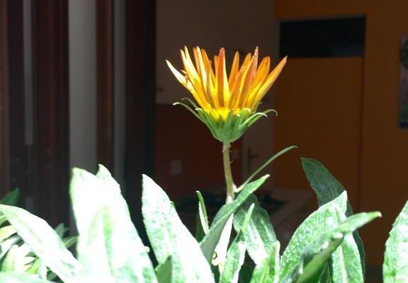Baroccando Ragusa Ibla - фото 6