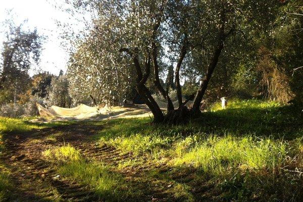 Vinegia - фото 7