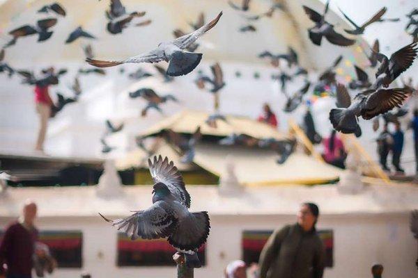 Hyatt Regency Kathmandu - фото 18