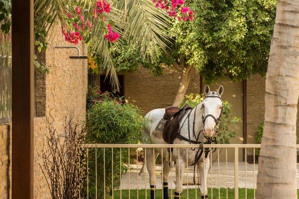 Desert Palm PER AQUUM - фото 18
