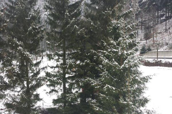 Holzwerk Oybin - фото 6