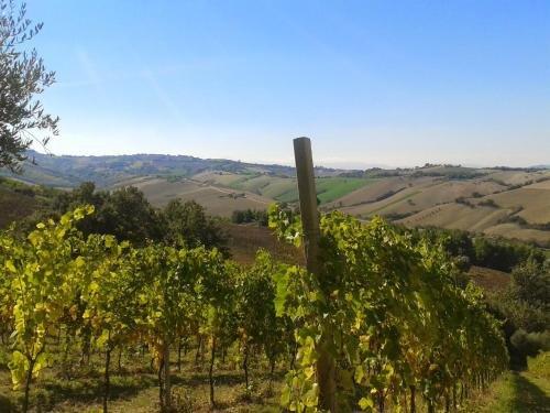 Agriturismo Le Vigne - фото 19