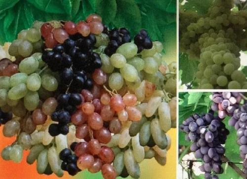 Апартаменты Room in apartments - фото 23