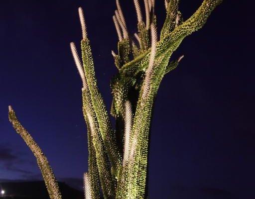Botanical Park Garden Cactus - фото 21