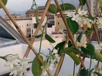 La Terrazza su Palermo - фото 21