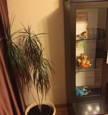 Apartment on Stroiteley - фото 9
