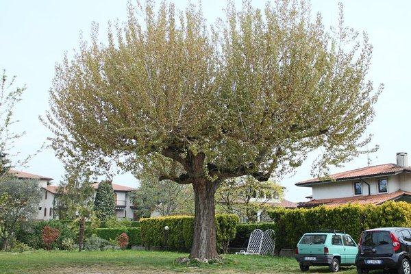 Albergo Trattoria Fioravante - фото 41