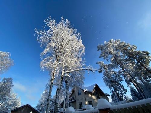 Cottages in Chernichnoe - фото 23