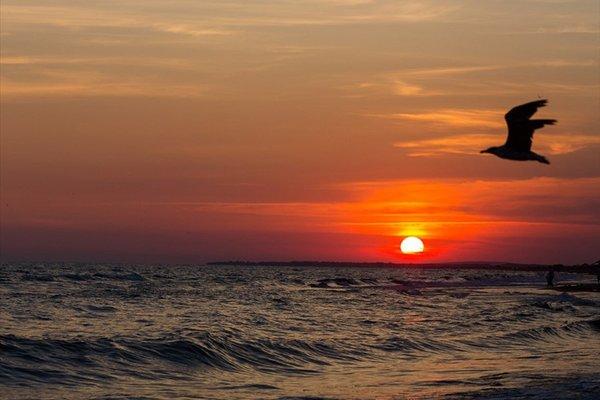 Солнечный берег (Solnechny bereg) - фото 9