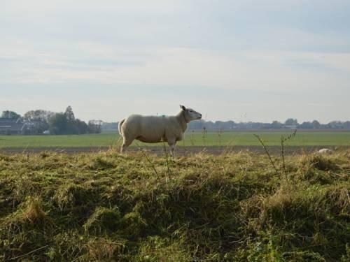 Het Biesbosch huisje - фото 22