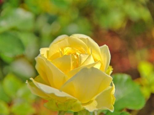 Haus Riedl - фото 10