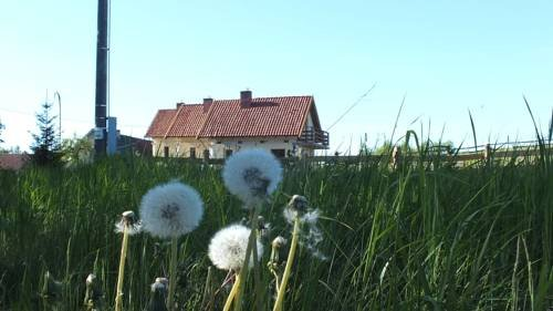 Domki na Mazurach Kurka Wodna - фото 16