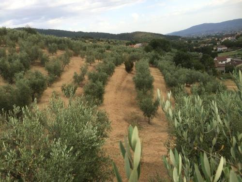 Agriturismo Terrarossa - фото 10